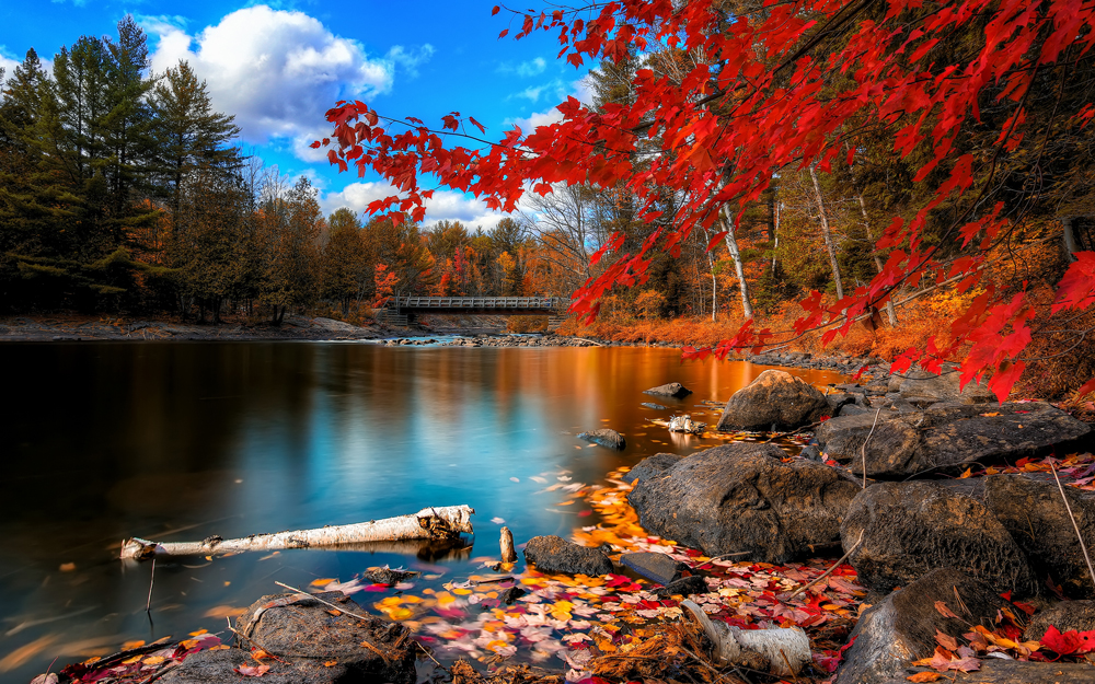 fall_foliage, wide